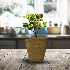 Sellerstreets Beautiful Small Planter | Handmade Small Planter | Ideal For All Types Of Gifting