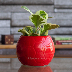 Sellerstreets Designer Planter | Handcrafted Ceramic Planter Pots for Indoor Plants/Planters, Garden Decor, Office Decor