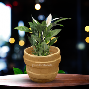 Sellerstreets Designer Flower Pot | Handmade Small Planter | Ideal For All Purpose Gifting